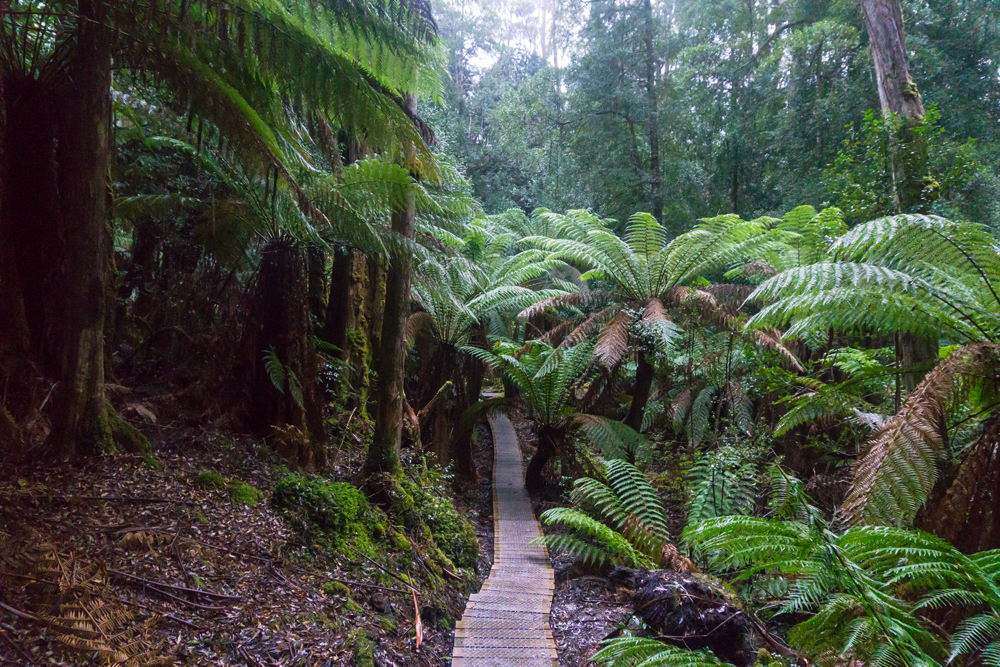 Fern Forest Three Capes Track