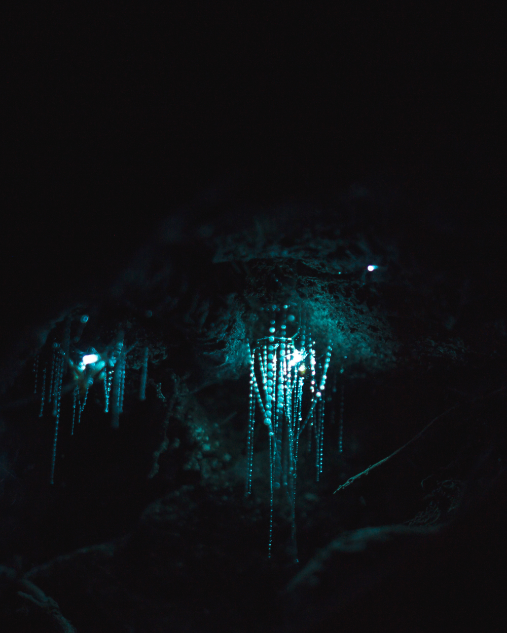 Glow Worms Mount Tamborine