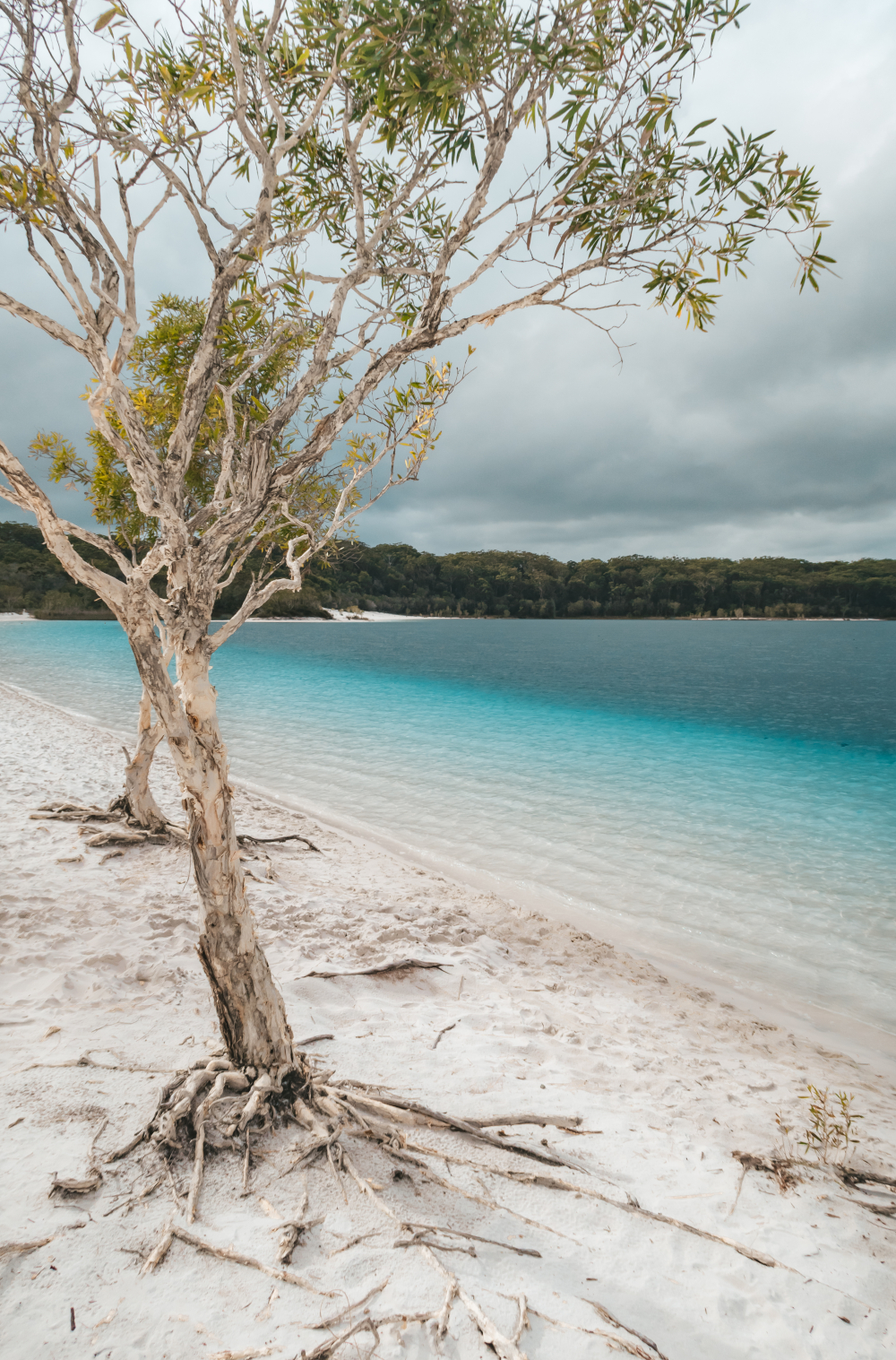 Lake McKenzie Fraser Island Kingfisher Bay Resort